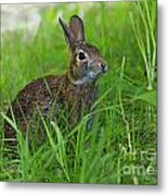 Rabbit Eating Grass In The Forest Metal Print