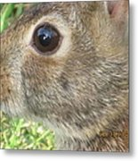 Rabbit Eye Metal Print