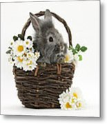 Rabbit In A Basket With Flowers Metal Print