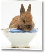 Rabbit In A China Bowl Metal Print
