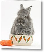 Rabbit In A Food Bowl With Carrot Metal Print