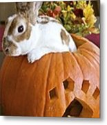 Rabbit Joins The Harvest Metal Print by Alanna DPhoto