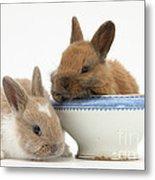 Rabbits And China Bowl Metal Print