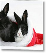 Rabbits In Hat Metal Print