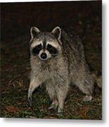 Raccoon Metal Print by Lali Partsvania