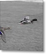 Race To The Water Metal Print