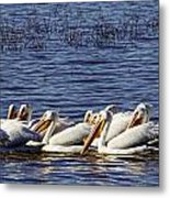 Raft Of Pelicans Metal Print