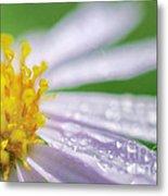 Rain Drop On Flower Metal Print
