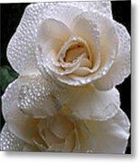 Rain Drop Roses Metal Print