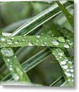 Rain Drops On Grasses Metal Print