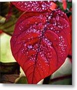Rain Drops On Red Leaves Metal Print