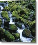 Rain Forest Stream Metal Print