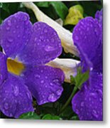 Rain On Purple Wonder Metal Print