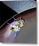 Rainbow Fly Metal Print