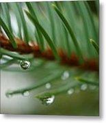 Raindrops And Fir Needles Metal Print