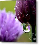 Raindrops On Chives Metal Print
