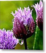 Raindrops On Chives Triptych Metal Print