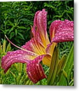 Raindrops On Lilly Metal Print