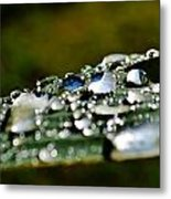 Raindrops On Lily Leafs Metal Print
