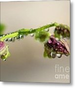 Raindrops On Orchid Buds Metal Print by Theresa Willingham