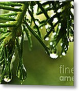 Raindrops On Pine Needles Metal Print