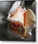 Raindrops On Roses Metal Print