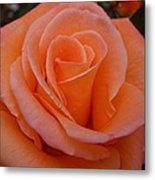 Raindrops On Roses Seven Metal Print
