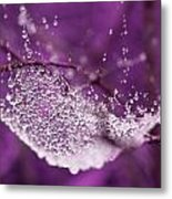 Raindrops On Web Metal Print