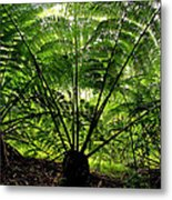 Rainforest Backlight Metal Print