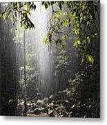 Rainforest, Bellingen, Australia Metal Print