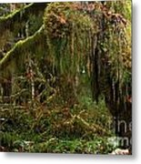 Rainforest Jaws Metal Print