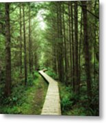 Rainforest (vancouver Island) Metal Print
