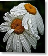 Rainy Day Daisies Metal Print