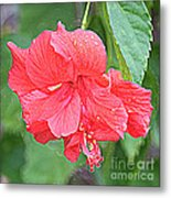 Rainy Day Hibiscus Metal Print