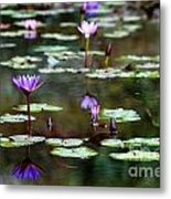 Rainy Day Lotus Flower Reflections Iv Metal Print