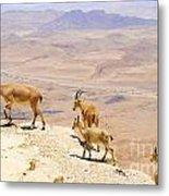 Ramon Crater Negev Israel Metal Print