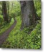 Ramsons By Path In Woods, County Louth Metal Print
