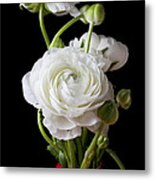Ranunculus In Red Vase Metal Print by Garry Gay