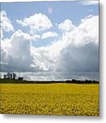 Rape Field Metal Print