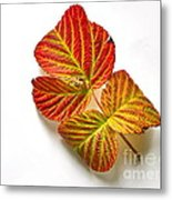 Raspberry Leaves In Autumn Metal Print
