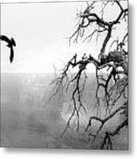 Raven In Grand Canyon Metal Print