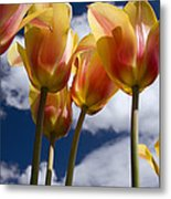 Reaching For The Clouds Metal Print