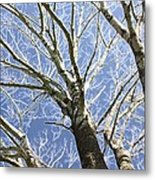 Reaching For The Sky Metal Print