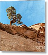 Reaching For The Sun Metal Print by Bob and Nancy Kendrick