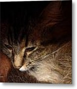 Ready For A Cat Nap Metal Print