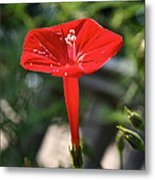 Real Red Metal Print