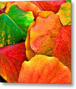 Really Colorful Fall Leaves Metal Print