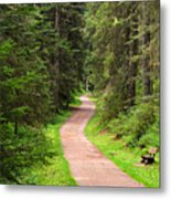 Recreation In Forest Metal Print
