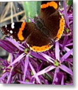 Red Admiral Butterfly Metal Print by Maria Scarfone