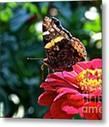 Red Admiral Probocis Metal Print